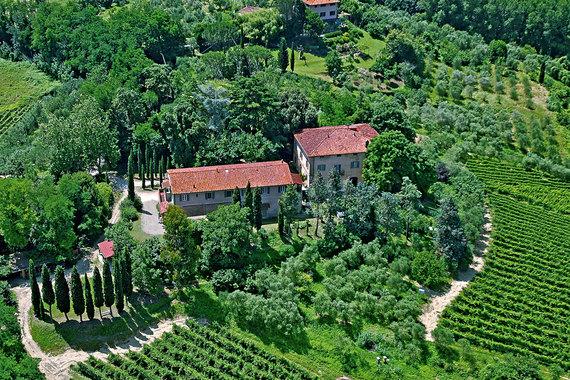 Как приобрести виноградники в Провансе