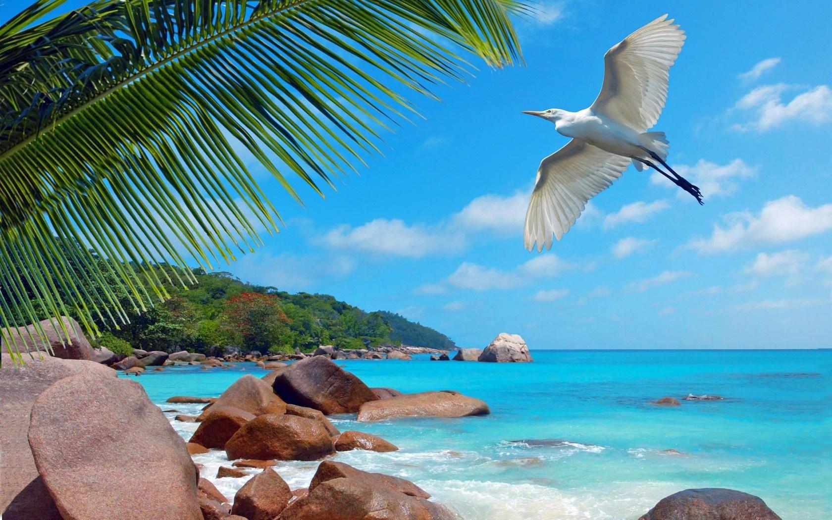Отдых на Сейшельских островах